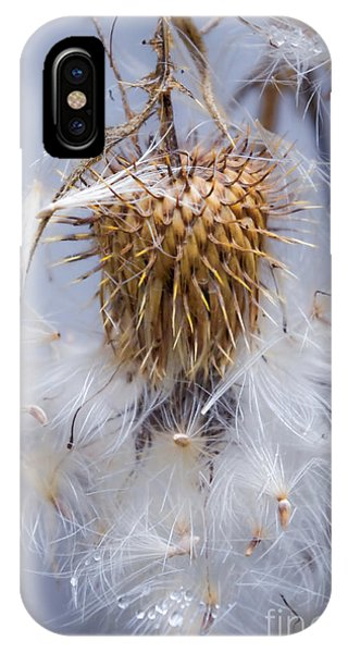 Spent Thistle IPhone Case