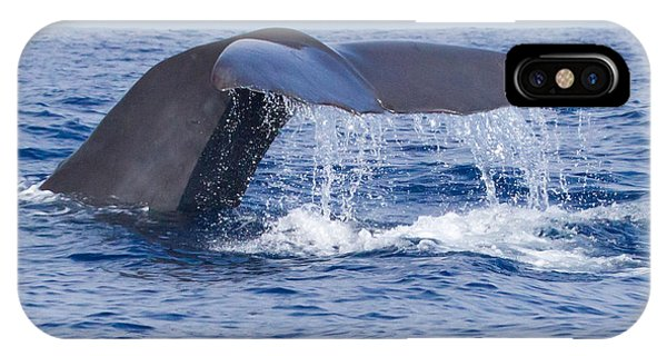 Sperm Whale Tail IPhone Case