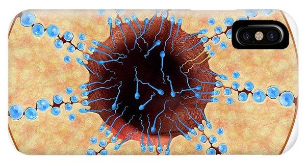 Tissue iPhone Case - Spermatogenesis by Claus Lunau