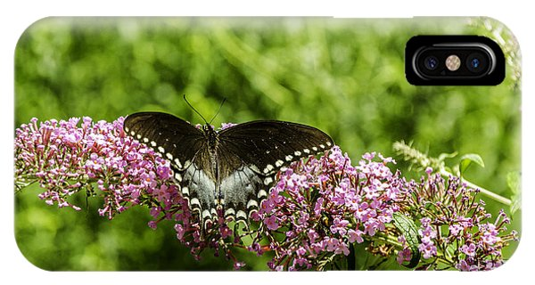 Spicebush Swallowtail IPhone Case
