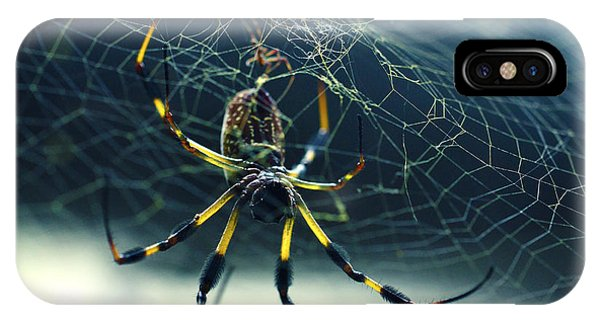 IPhone Case featuring the photograph Spider Close Up by Matt Hanson