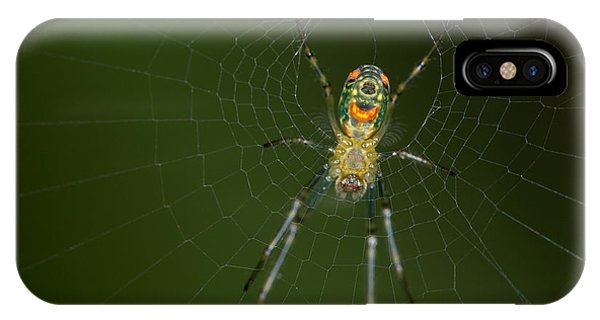 Spider In Mexico Phone Case by Brian Magnier