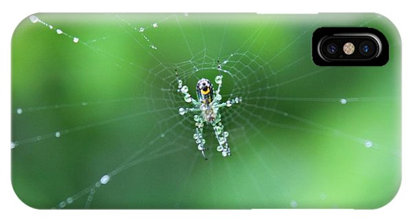 Spider Raindrops IPhone Case