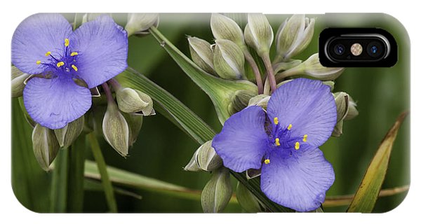 Tradescantia iPhone Case - Spiderwort 1 by Thomas Young