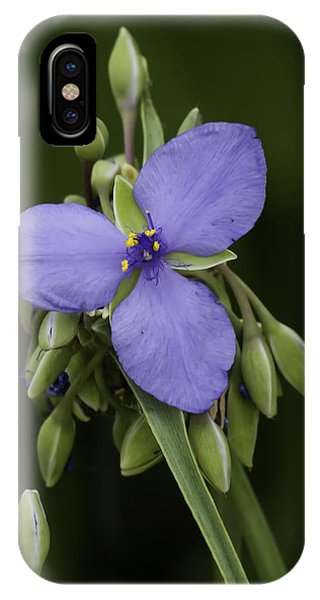 Tradescantia iPhone Case - Spiderwort 2 by Thomas Young