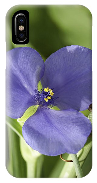 Tradescantia iPhone Case - Spiderwort 4 by Thomas Young