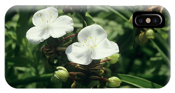 Cultivar iPhone Case - Spiderwort 'pauline' by Sally Mccrae Kuyper/science Photo Library