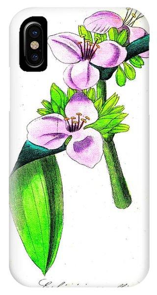 Tradescantia iPhone Case - Spiderwort (tradescantia Tumida) by Collection Abecasis/science Photo Library