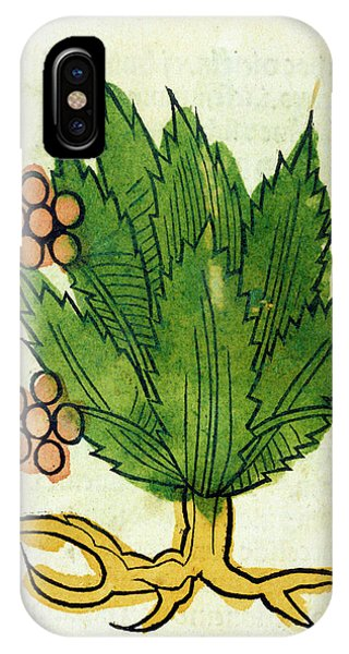 Spikenard Medicinal Plant Phone Case by National Library Of Medicine