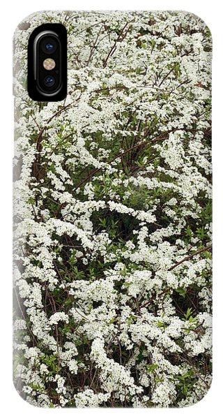 Deciduous iPhone Case - Spiraea 'arguta' by Geoff Kidd/science Photo Library