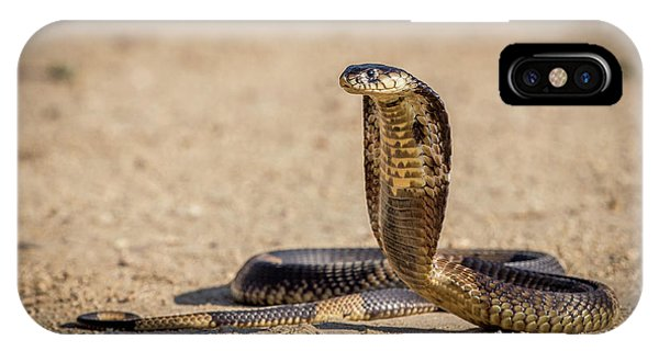 Hit iPhone Case - Spitting Cobra In Strike Pose. by Jeffrey C. Sink
