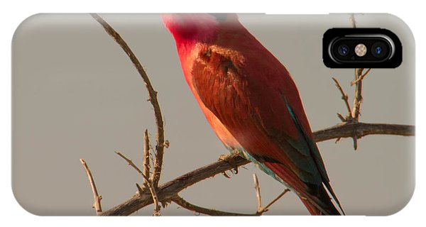 Splendor In Color IPhone Case