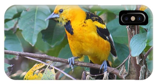 Spot-breasted Oriole Teenager IPhone Case
