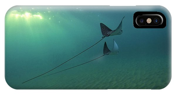 Spotted Eagle Rays During Sunset IPhone Case