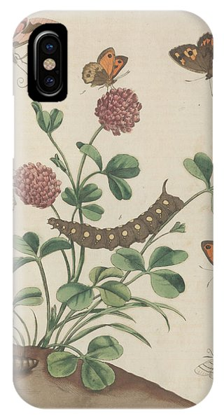 Chrysalis iPhone Case - Spotted Elephant Hawk-moth by Natural History Museum, London/science Photo Library