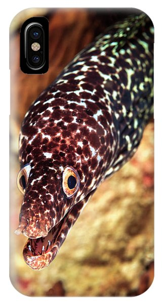 Carribbean iPhone Case - Spotted Moray (gymnothorax Moringa by James White