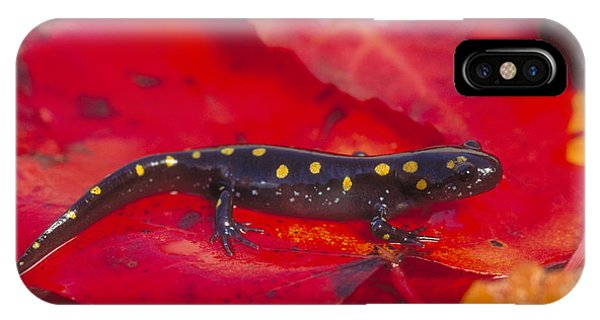 Spotted Salamander IPhone Case