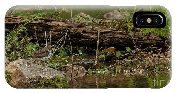 Lake Juliette iPhone Case - Spotted Sandpiper 2 by Donna Brown
