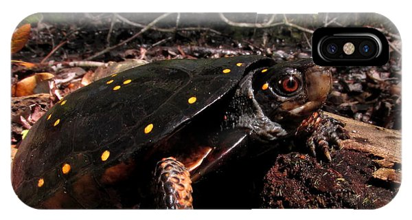 Spotted Turtle IPhone Case