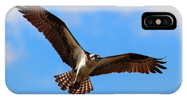 Ospreys iPhone Case - Spread Your Wings by Mike  Dawson