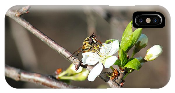 Spring Bee On Apple Tree Blossom IPhone Case