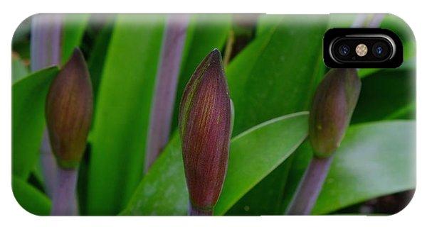 Spring Buds Amaryllis IPhone Case