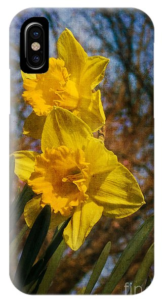 Spring Daffodils  IPhone Case