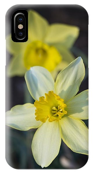 IPhone Case featuring the photograph Spring Daffodils by MM Anderson
