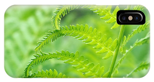 Spring Fern IPhone Case