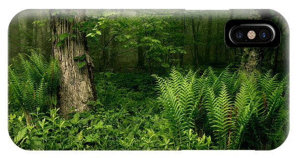 Spring Ferns Of The Blue Ridge 1 IPhone Case