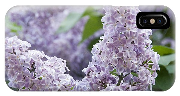Spring Lilacs In Bloom IPhone Case