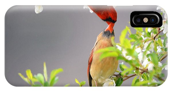 Cardinal Spring Love IPhone Case