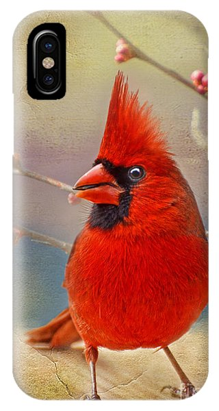 Spring Male Norther Cardinal IPhone Case