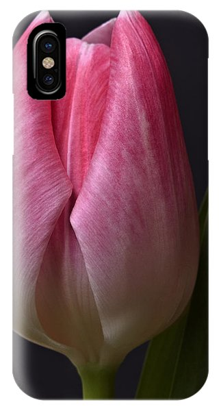 A Beautiful Pink Tulip Flower On Black Background Close-up Photography Floral Art Print IPhone Case