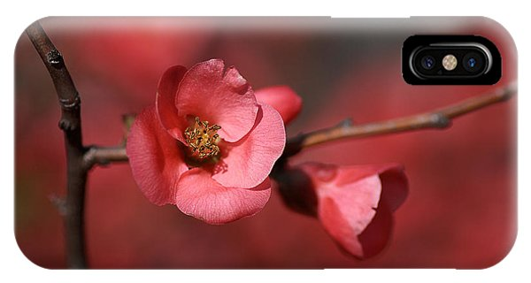 Spring Richness - Flowering Quince IPhone Case