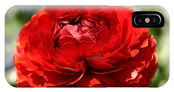 Spring Scarlet Double Begonia IPhone Case