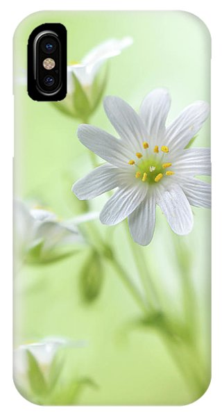 Tender iPhone Case - Spring Sparkle by Mandy Disher