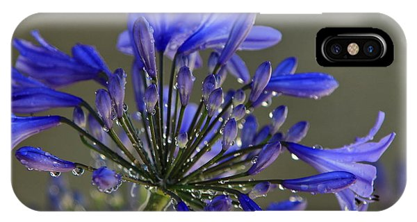 Spring Time Blues IPhone Case