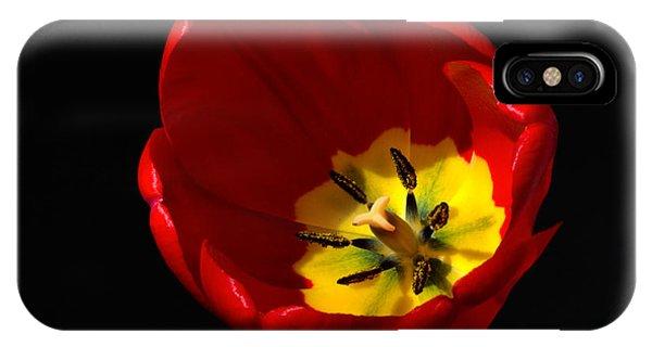 Spring Tulip 1 IPhone Case