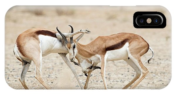 Behaviour iPhone Case - Springbok Males In Territorial Combat by Tony Camacho