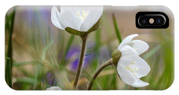 Springtime Blossom IPhone Case