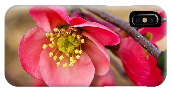 Springtime Quince IPhone Case