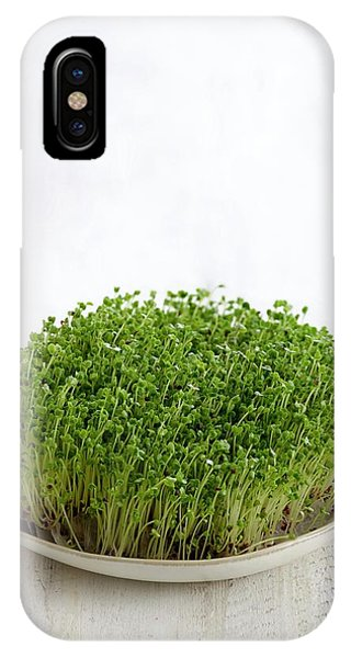 Sprouting Broccoli In A Dish Phone Case by Science Photo Library