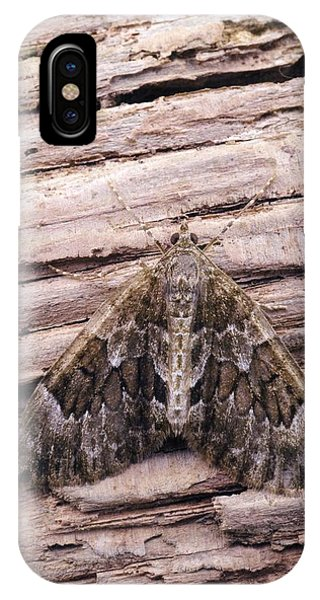 Spruce iPhone Case - Spruce Carpet Moth by David Aubrey