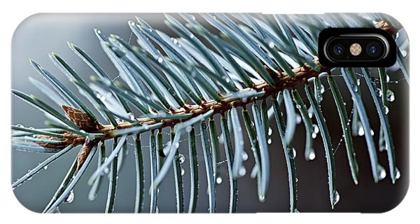 Spruce iPhone Case - Spruce Needles With Water Drops by Elena Elisseeva