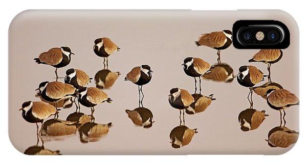 Spur-winged Lapwing (vanellus Spinosus) IPhone Case