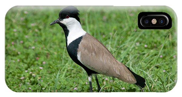 Spur-winged Plover IPhone Case