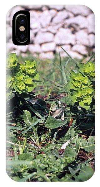 Spurge (euphorbia Helioscopia) Phone Case by Bruno Petriglia/science Photo Library