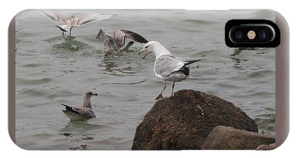 Squabbling Gulls-ii IPhone Case