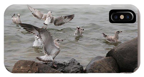Squabbling Gulls IPhone Case